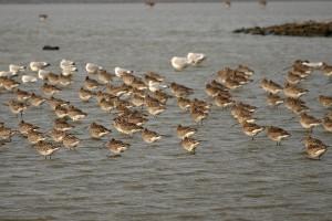 lauwersmeer vogels